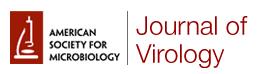 JVI-logo