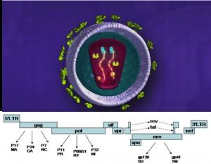 HIVstructure